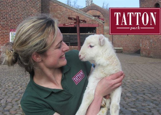 Secrets of the Lambing Shed