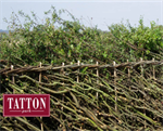 An Introduction to Hedgelaying