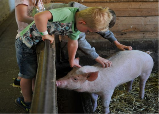 summer farm activities 700x500
