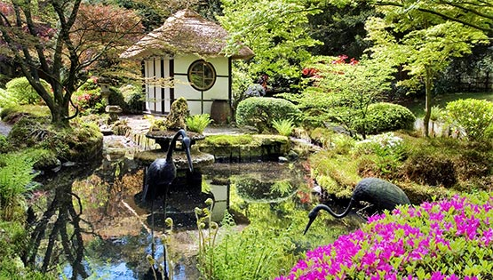 Japanese Gardens at Tatton Park