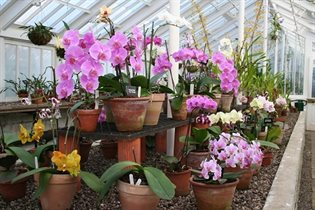 Orchid House 3 - web file