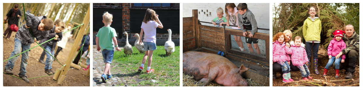 farm family fun collage