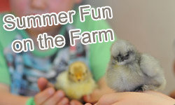 summer-fun-on-the-farm-2018-banner