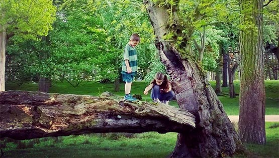 C hildren climb on a fallen tree