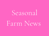 seasonal farm news button tile