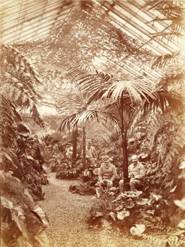 The Fernery pre 1891