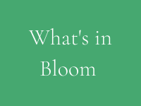 what's in bloom